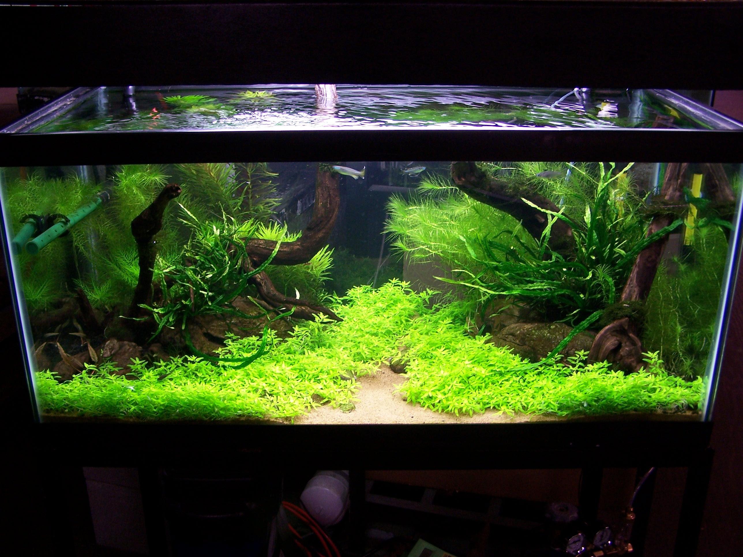 Aquascape Ideas Aquascape Freshwater Aquascape Ideas