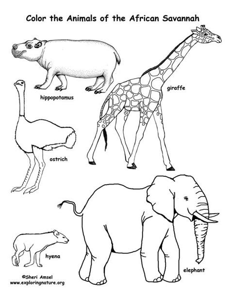 savanna african animals coloring page geography
