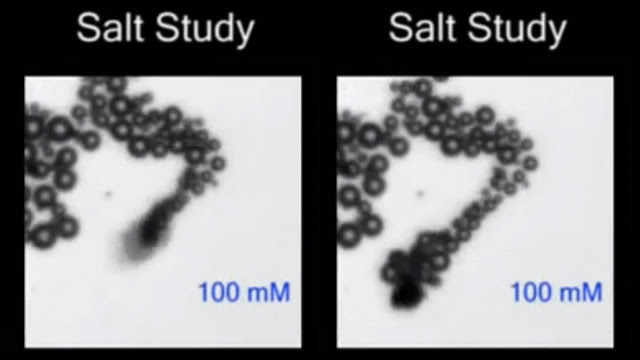Water Powered Nano Rockets Can Safely Explore the Human Body