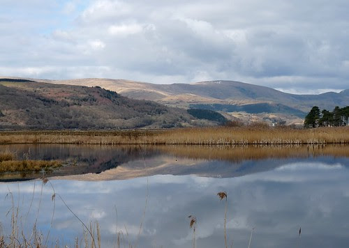 12062 - Reflection at RSPB Ynys-Hir