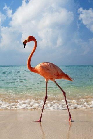 Flamingo at the Beach