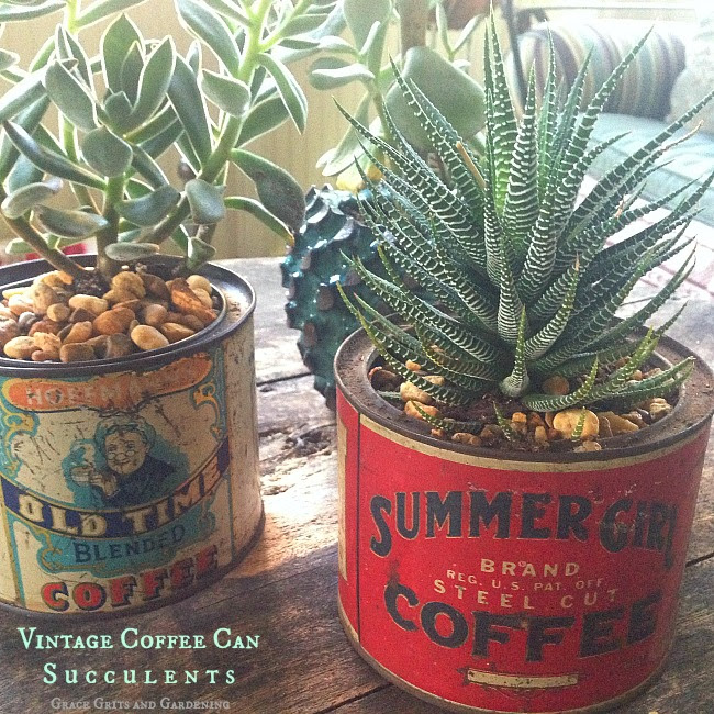 Vintage Coffee Can Succulents