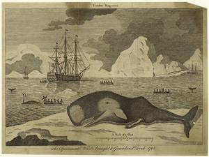The spermacæti whale to Greenl... Digital ID: 823818. New York Public Library