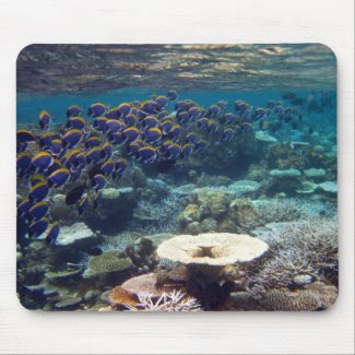 Mouse Mat - Powder Blue Surgeon Fish Mouse Pads