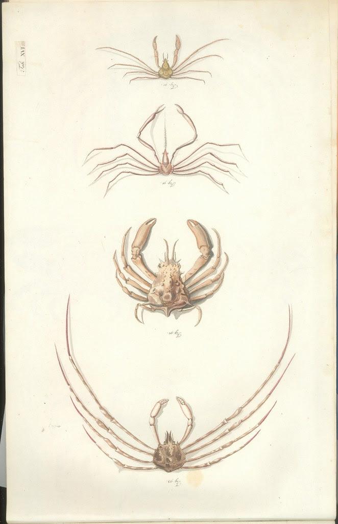 Versuch einer Naturgeschichte der Krabben und Krebse b