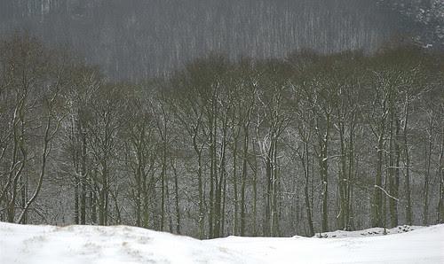Pitty Wood