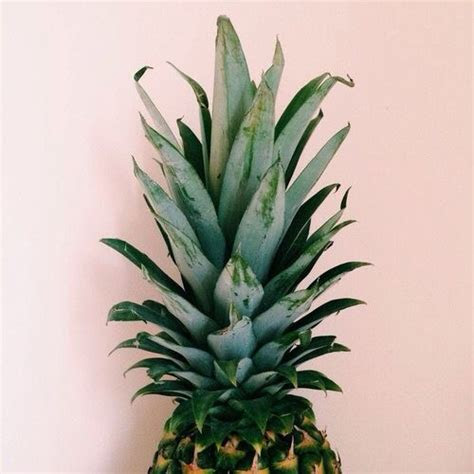 tumblr pineapple wallaper iphone wallpapers
