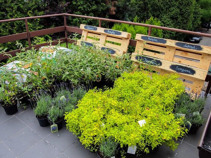 20 Images Garden Design Roof Terrace