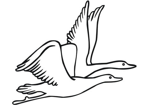Dibujo De Dos Gansos Volando Para Colorear Dibujos Para Colorear