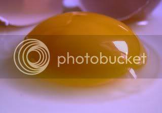 gambar kuning telur