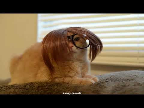 [Funny] Cats Wearing Sunglasses
