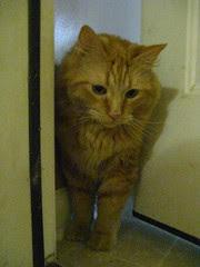 Jasper contemplates the garage