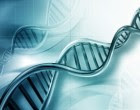 Epigenetic mechanisms which influence gene expression