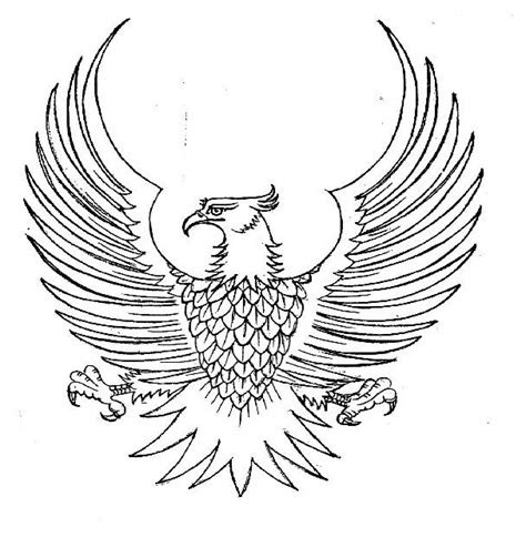 sketsa gambar burung garuda terbaru gambarcoloring