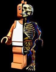 Anatomía de un Lego