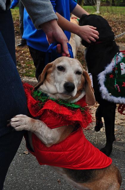 Smithfield Christmas Parade (9)