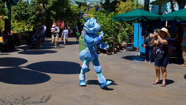 Disneyland Resort, Disney California Adventure, Bug, Land, Flik