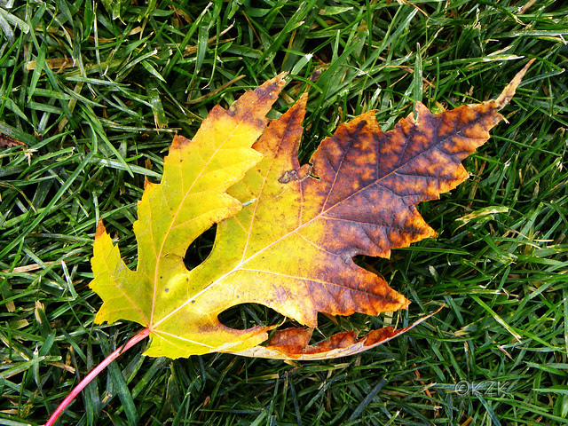 DSCN7289 Autumn leaf color