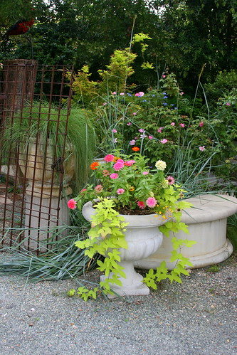 container plants