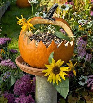 Pumpkin Birdseed Feeder