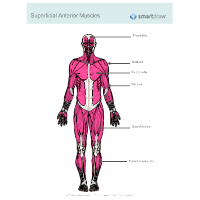 Anatomy Chart - How to Make Medical Drawings and Illustrations