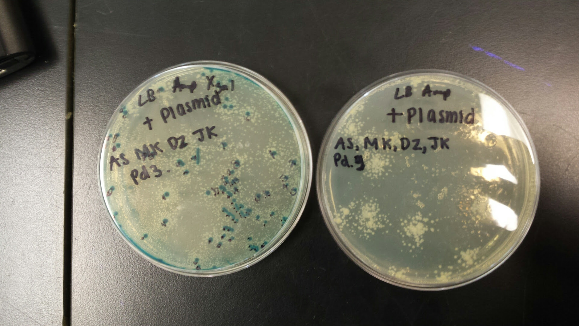 straubel / AP Biology 2015-16