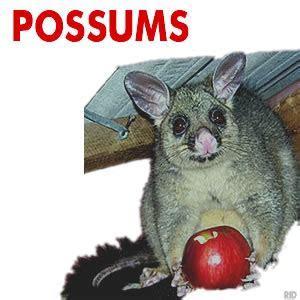 Possum Removal Ballarat   RID Pest Control