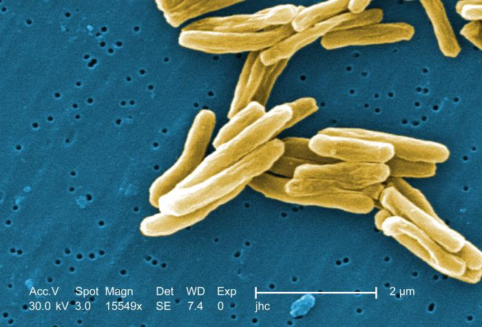 Mycobacterium Tuberculosis Cell Shape And Arrangement