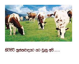 Sri Lankans Under Milk Powder Terrorist Attack