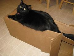 Huggy on the box