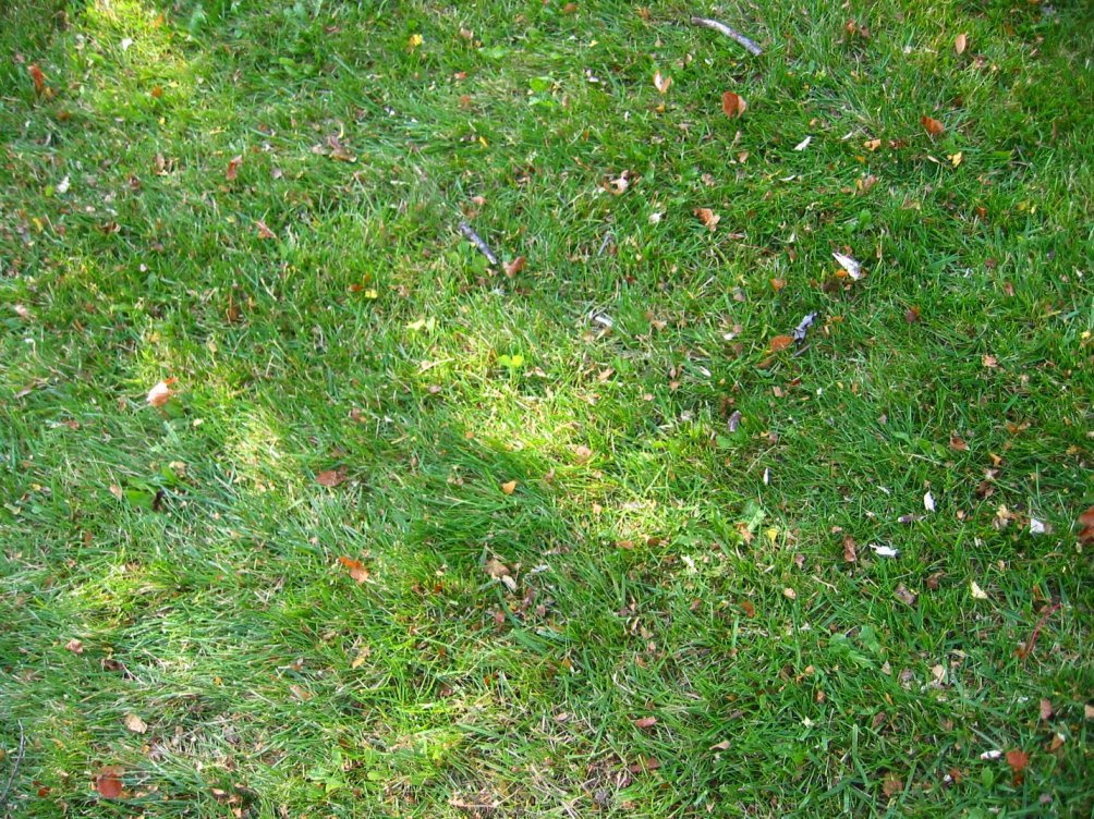 Leaves after mulching - nov 11, 2007 - soul-amp.com