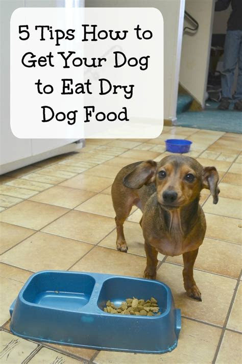 finding food  picky dogs dog food pets  money