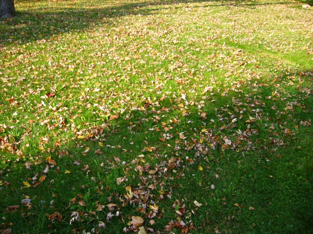 Leaves before mulching - nov 11, 2007 - soul-amp.com