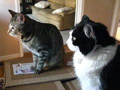 Maggie and Josie on the box