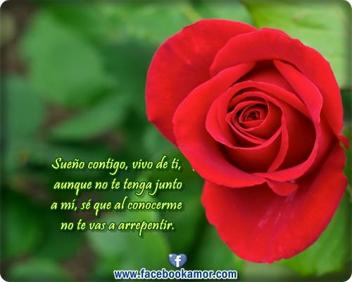 Frases De Rosas 63 Frases