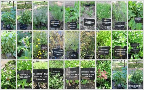Turku Castle -herbs