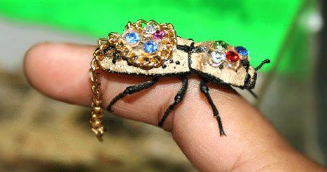 Bug on a leash - Imgur