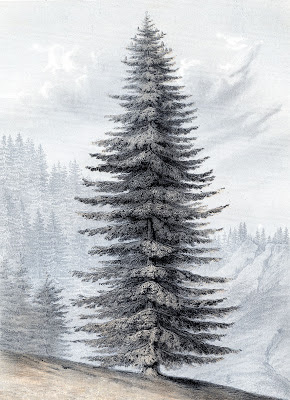 Instant Art - Giant Christmas Tree - Botanical
