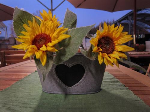 sunflower googles