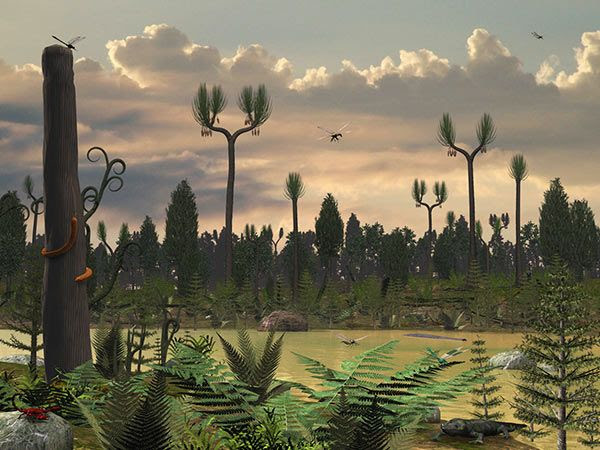carboniferous - Google Search