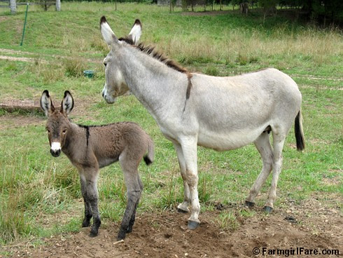 The Daily Donkey 133