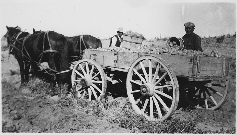 File:Horse drawn wagon loaded with potatoes - NARA - 285660.jpg