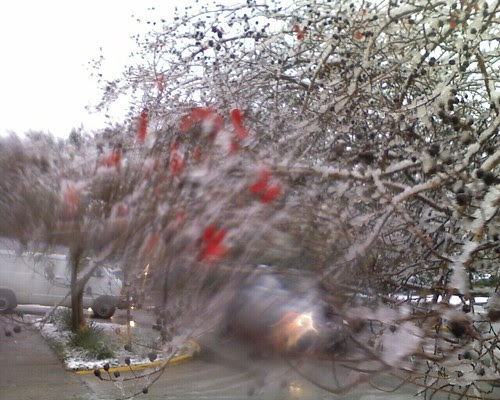 redbuds frozen on the tree