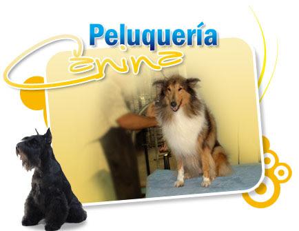 Curso gratis de Peluqueria Canina Corte Peinados Perros Animales