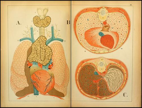 atlas anatomie enfant 14 Atlas anatomique pour écoliers en 1879  information histoire design