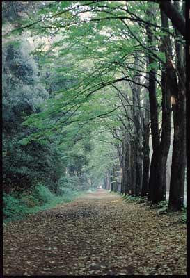 pinete e spazi verdi a Viareggio, in Versilia