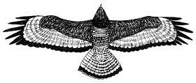 Ptaki Drapieżne Cz 3