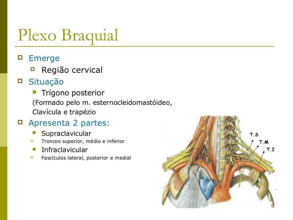 Composição do plexo braquial