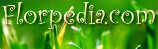 Enciclopedía de las Flores: florpedia.com
