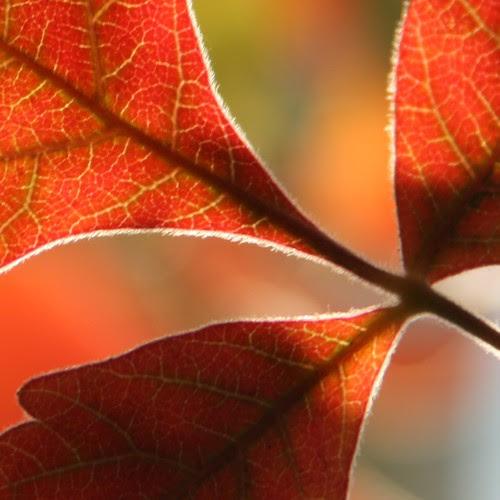 Autumn Leaf Bokeh